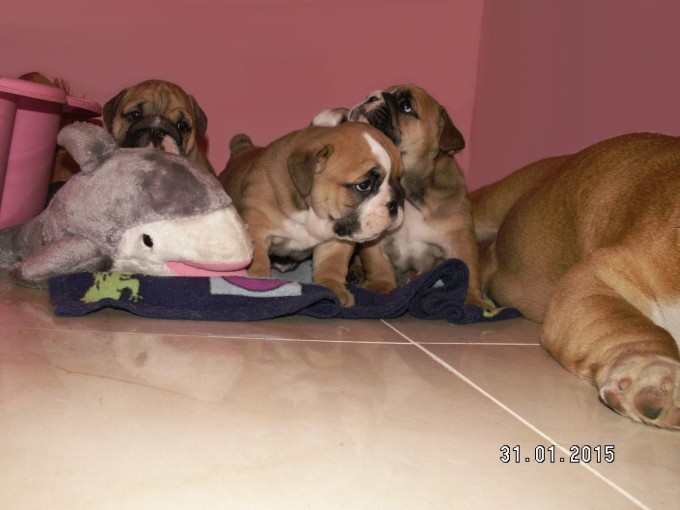 "Coco's ""I"" Litter"